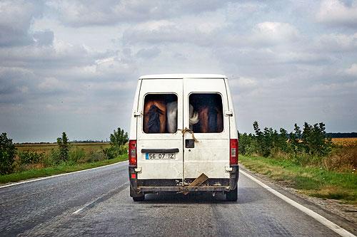 Trei cai frumosi