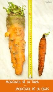 morcovi-eco