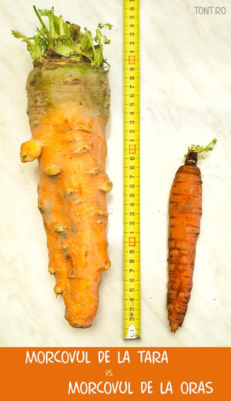 Post cu morcov